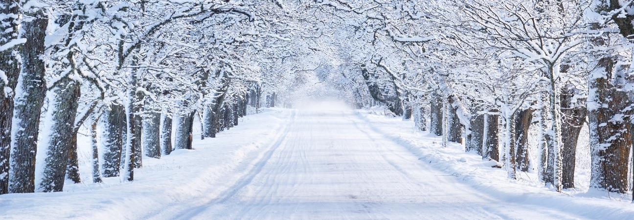 Snowy trail through trees